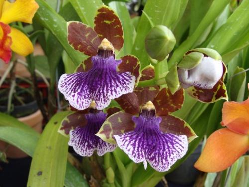 Orchideen 09