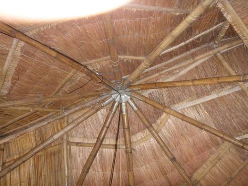 Bambus Farm 24